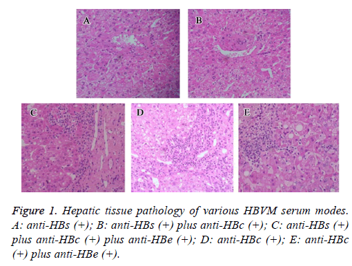 biomedres-Hepatic-tissue