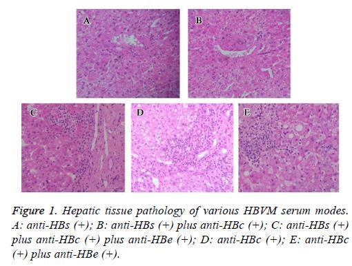 biomedres-Hepatic-tissue