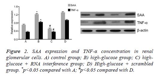 biomedres-High-glucose