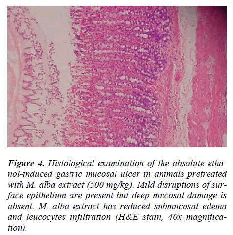 biomedres-Histological-examination-absolute