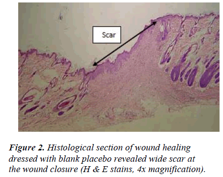 biomedres-Histological-wound-dressed-blank