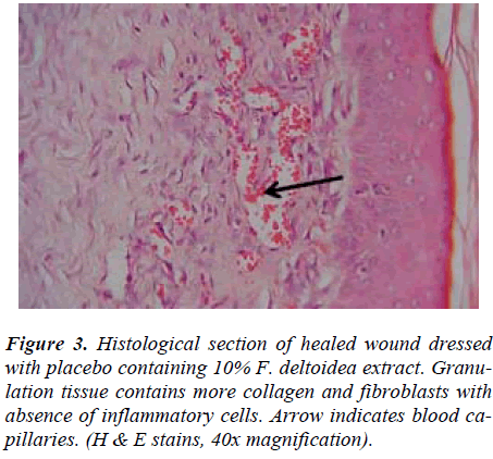 biomedres-Histological-wound-dressed-extract