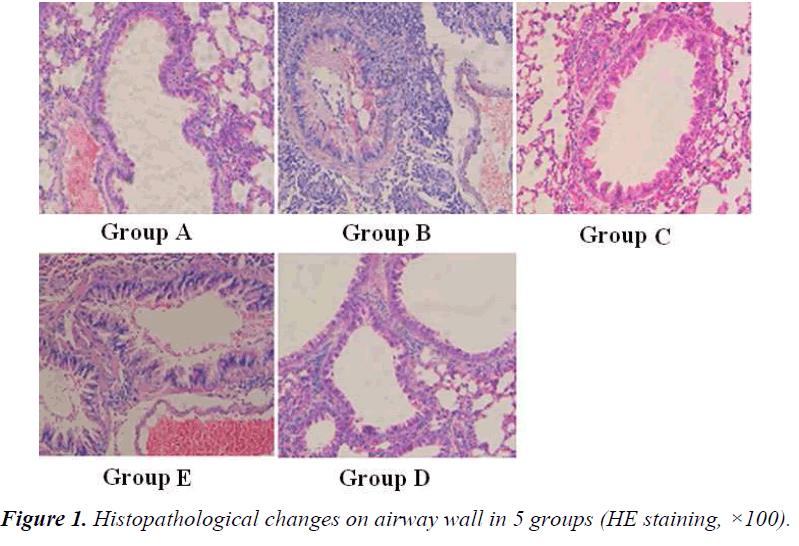 biomedres-Histopathological-changes