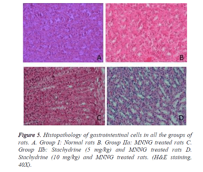 biomedres-Histopathology