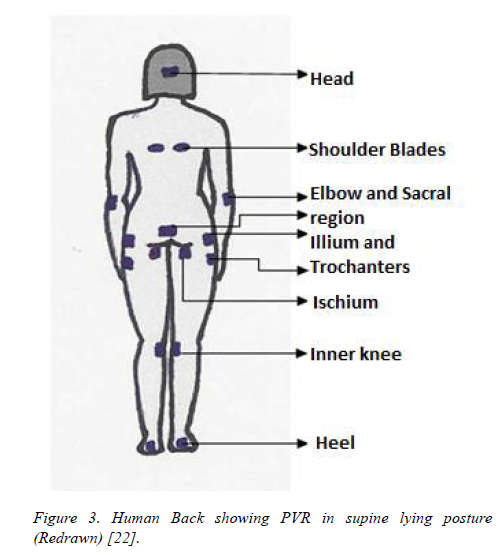 biomedres-Human-Back-showing