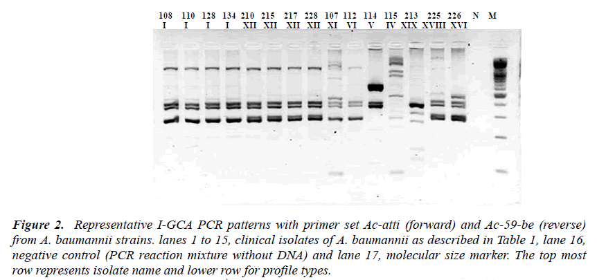 biomedres-I-GCA-PCR-patterns