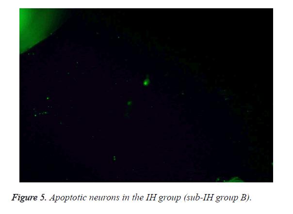 biomedres-IH-group