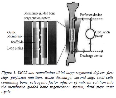 biomedres-IMCS-situ