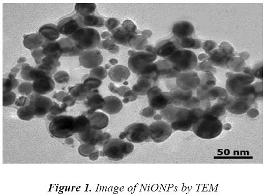 biomedres-Image-NiONPs-TEM