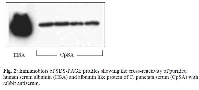 biomedres-Immunoblots-SDS-PAGE-profiles