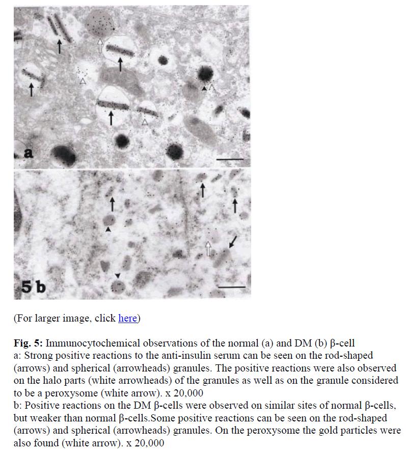 biomedres-Immunocytochemical-observations