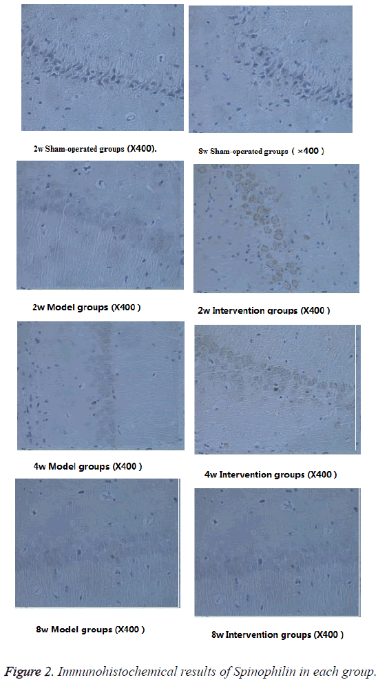 biomedres-Immunohistochemical-results