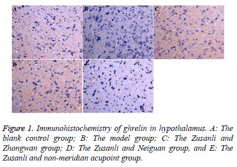 biomedres-Immunohistochemistry