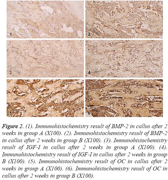 biomedres-Immunohistochemistry-result-BMP
