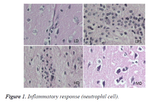 biomedres-Inflammatory-response