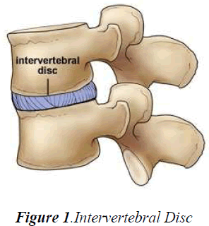 biomedres-Intervertebral-Disc