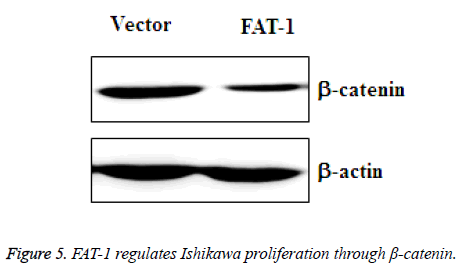 biomedres-Ishikawa-proliferation