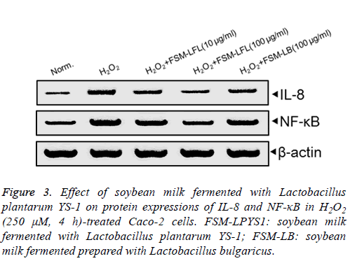 biomedres-Lactobacillus-plantarum