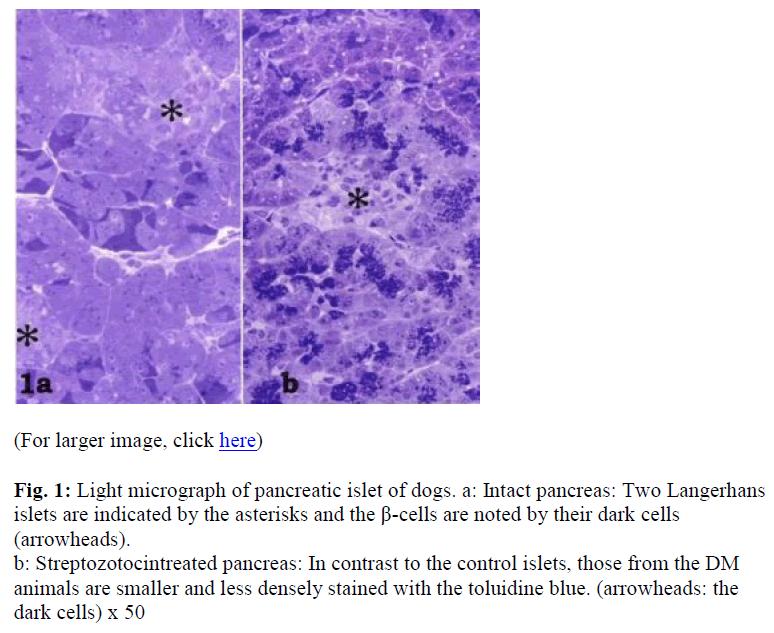 biomedres-Light-micrograph