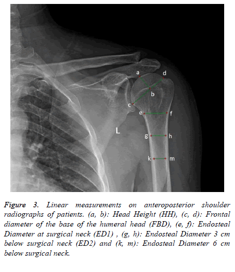 biomedres-Linear-measurements