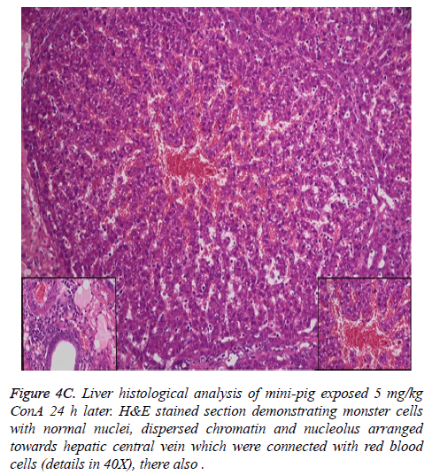 biomedres-Liver-histological