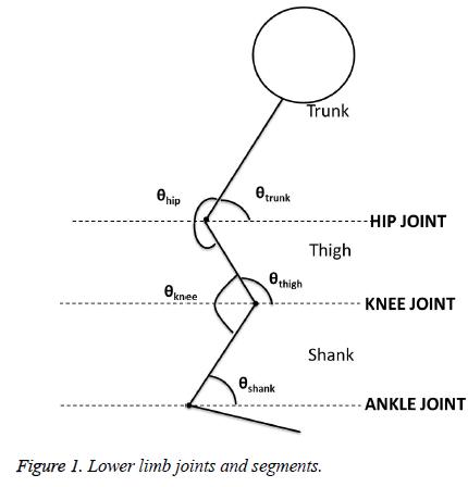 biomedres-Lower-limb