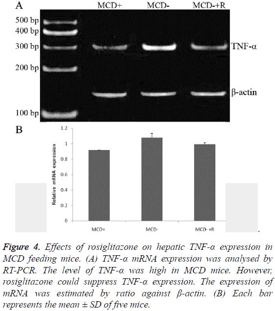 biomedres-MCD-feeding-mice