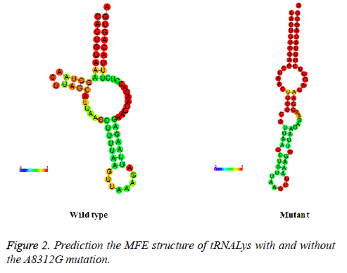 biomedres-MFE-structure