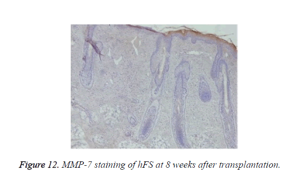 biomedres-MMP-7-staining