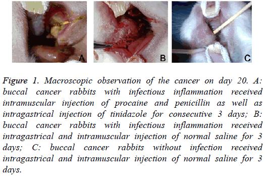 biomedres-Macroscopic-observation