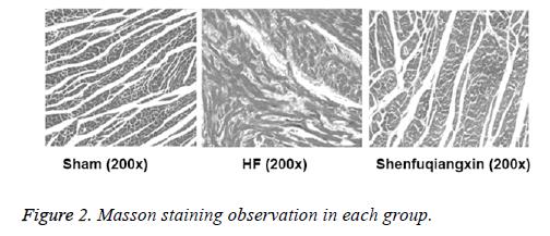 biomedres-Masson-observation