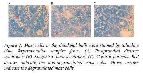 biomedres-Mast-cells