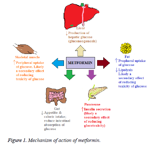 biomedres-Mechanism-action