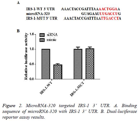 biomedres-MicroRNA-320-targeted