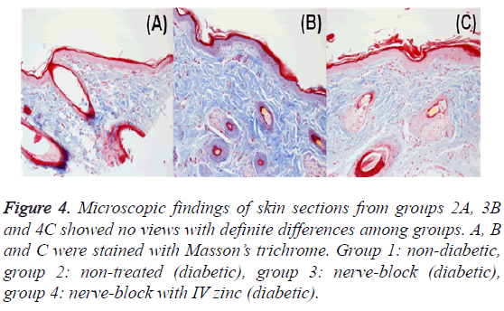 biomedres-Microscopic-findings-skin