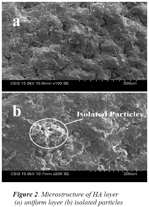biomedres-Microstructure-uniform-isolated