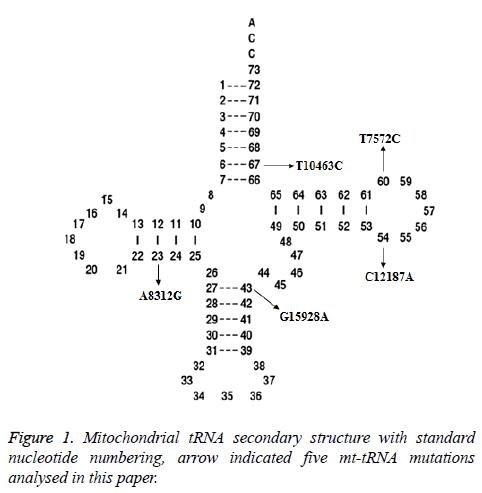 biomedres-Mitochondrial-tRNA