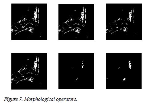 biomedres-Morphological