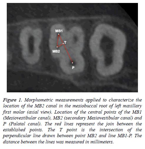 biomedres-Morphometric-measurements