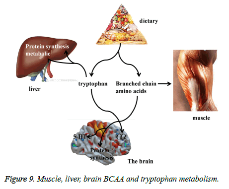biomedres-Muscle-liver