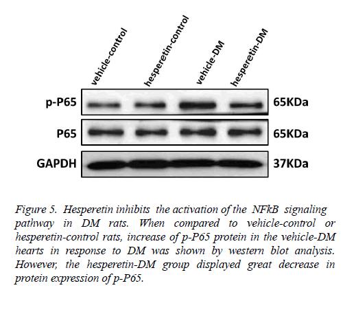 biomedres-NFkB-signaling