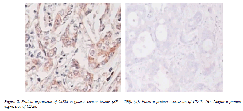 biomedres-Negative-protein