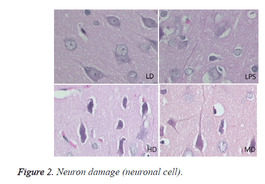 biomedres-Neuron-damage