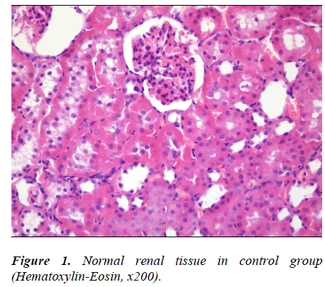 biomedres-Normal-renal