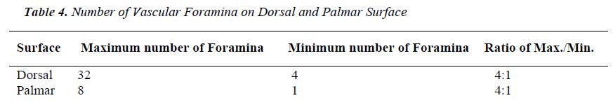 biomedres-Number-Vascular-Foramina-Dorsal