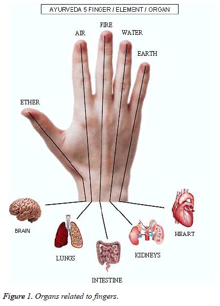 biomedres-Organs-fingers