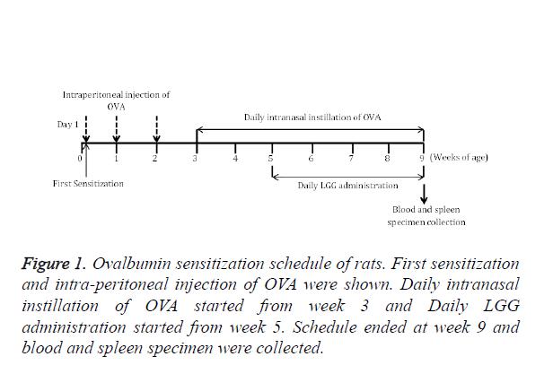 biomedres-Ovalbumin-sensitization