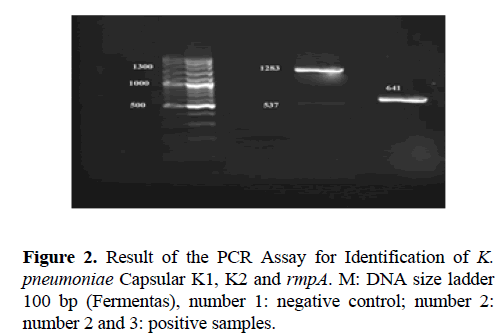 biomedres-PCR-Assay