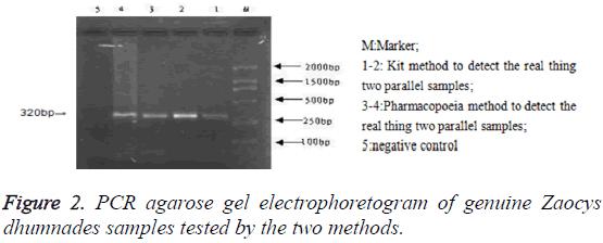 biomedres-PCR-agarose-gel