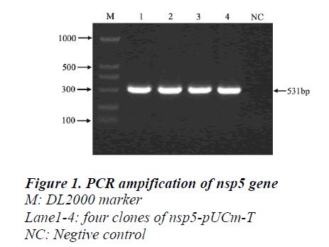 biomedres-PCR-ampification